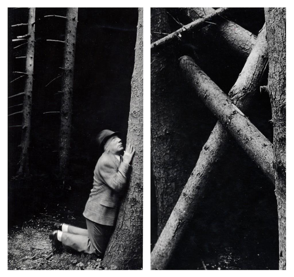Im Wald, A + B Blume, 1992 Tirages sur papier aux sels d'argent 2 / 1.20 x 0,80 Courtesy Galerie Françoise Paviot Representé(e) par:Françoise Paviot